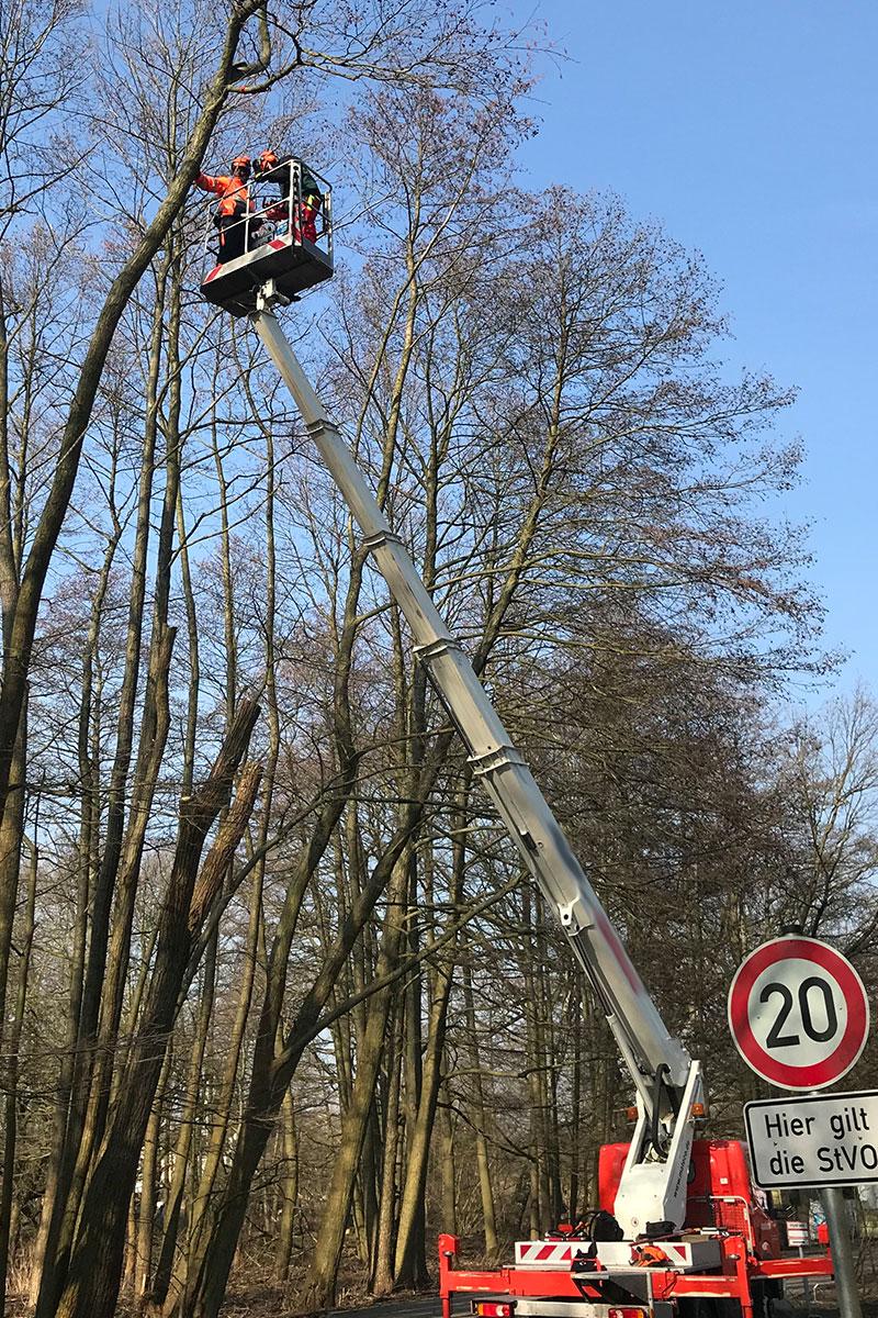 Bild Arbeitseinsatz eines Baumeinsatzes zur Pflege / Fällung durch die Firma WARDAWAS GmbH