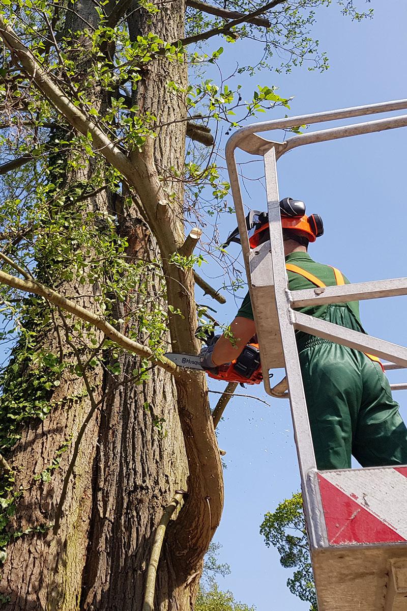 Mann beim Klettern auf Baum: Spezialeinsatz der Firma WARDAWAS Berlin / Brandenburg