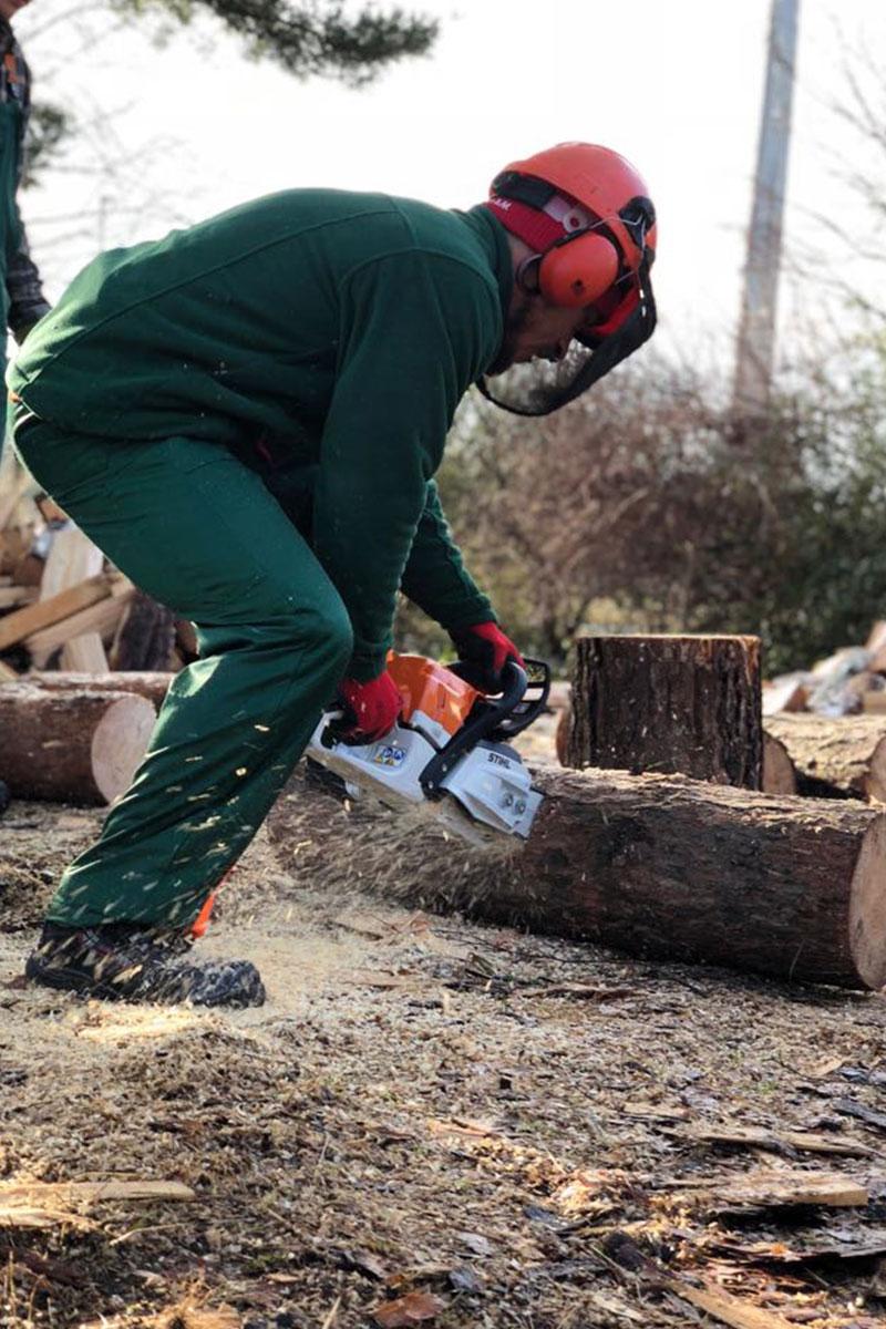 Mann beim Zersägen eines Baums: Spezialeinsatz der Firma WARDAWAS Berlin / Brandenburg