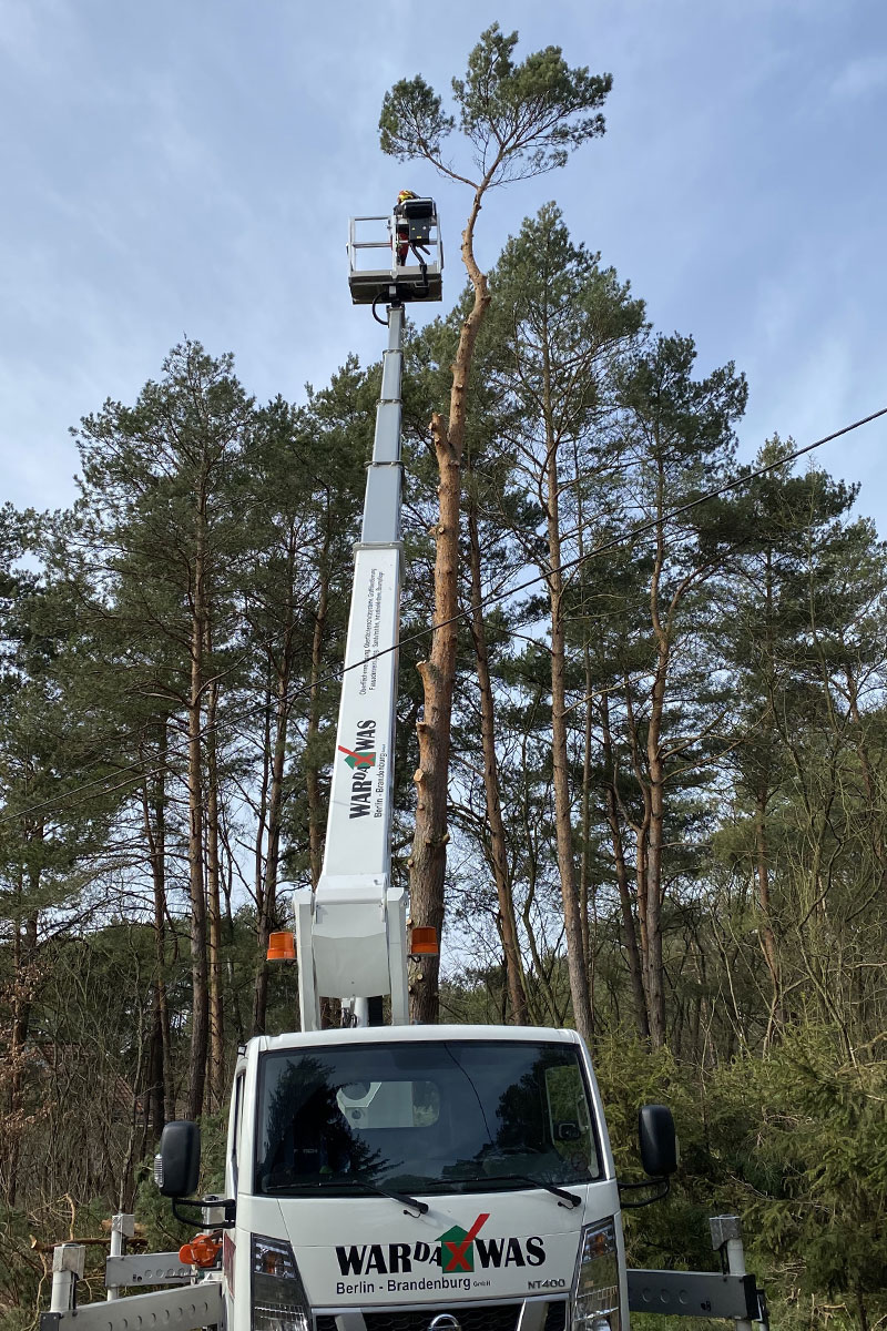 Baumfällung durch die Firma WARDAWAS Berlin-Brandenburg GmbH